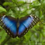 NĚŽNÝ ZELENÝ SVĚT - Modrý diadém